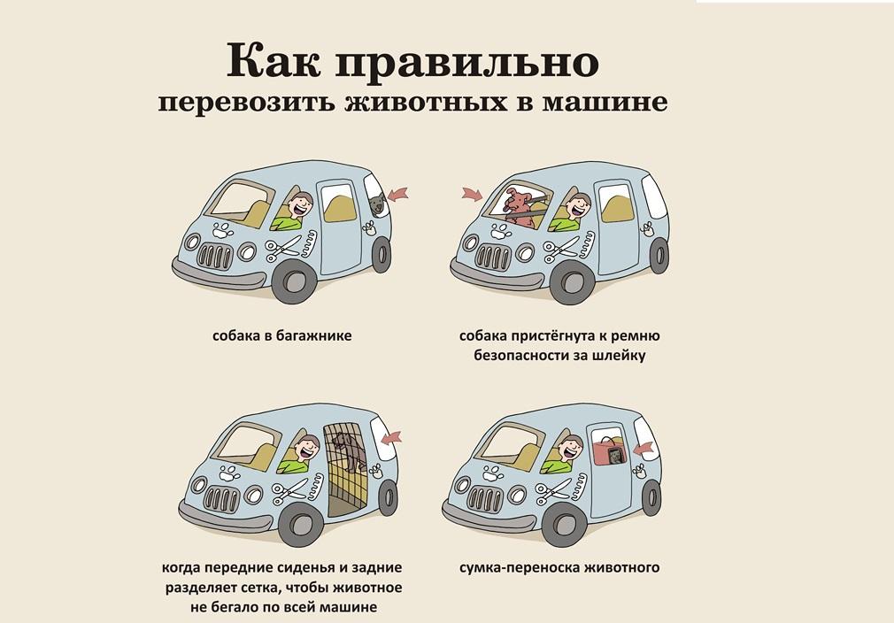 Перевозка животных в такси