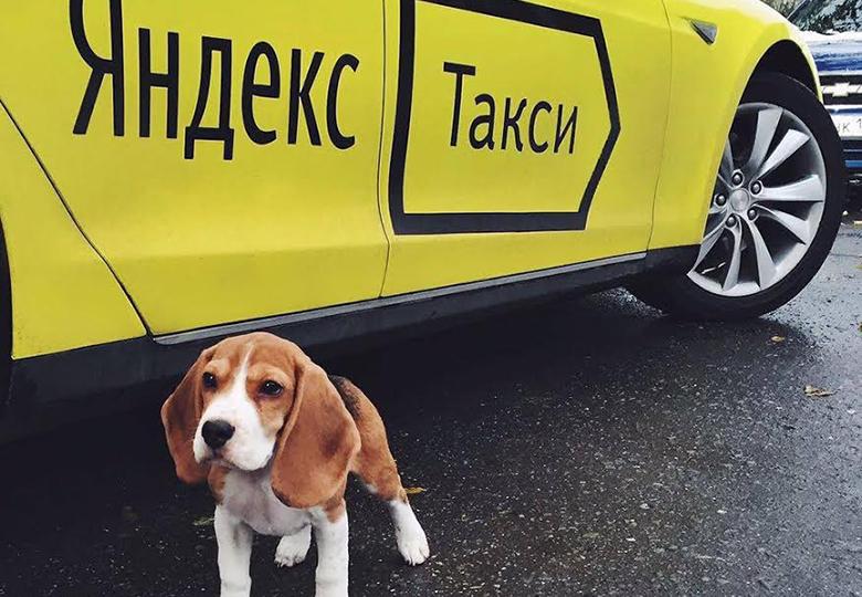 Животные в такси
